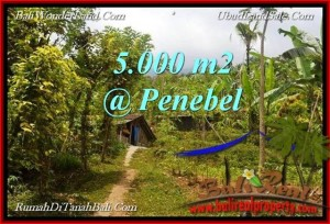 Affordable Tabanan Jatiluwih BALI LAND FOR SALE TJTB215