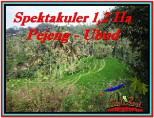 Affordable 12,000 m2 LAND FOR SALE IN UBUD BALI TJUB520