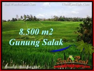 FOR SALE 8,500 m2 LAND IN TABANAN TJTB223
