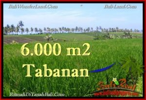 Beautiful PROPERTY 6,000 m2 LAND IN Tabanan Selemadeg FOR SALE TJTB267