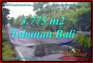 Exotic 3,775 m2 LAND FOR SALE IN TABANAN BALI TJTB271