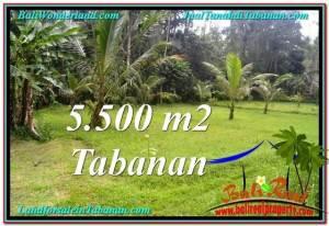Exotic 5,500 m2 LAND FOR SALE IN TABANAN BALI TJTB295
