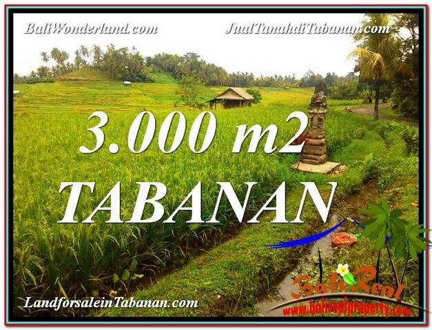 Magnificent PROPERTY 3,000 m2 LAND SALE IN Tabanan Selemadeg TJTB328