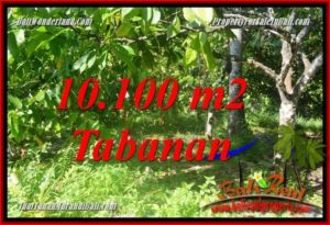 Magnificent Tabanan Selemadeg Barat 10,100 m2 LAND FOR SALE TJTB360