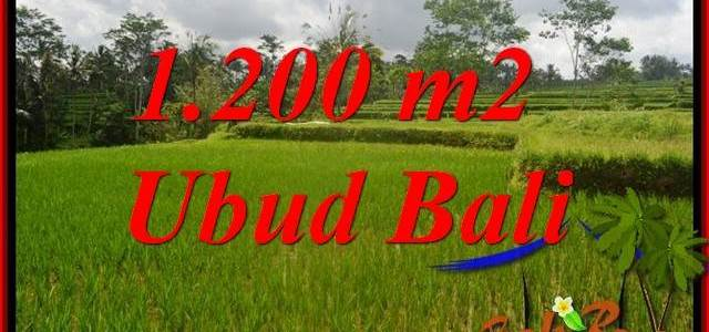 Exotic Property 1,200 m2 Land for sale in Ubud Tegalalang Bali TJUB693