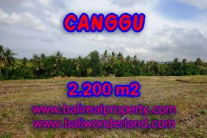 Amazing Property in Bali, Land for sale in Canggu Bali – TJCG128