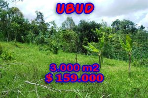 Land for sale in Ubud Bali 30 Ares in Ubud Payangan