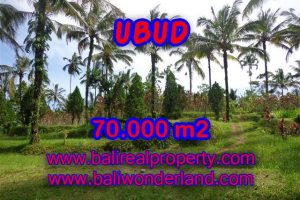 Fantastic Land for sale in Bali, mountain and paddy view by the river in Ubud Payangan – TJUB358