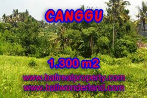 Land in Canggu for sale, Stunning view in Canggu Batu bolong Bali – TJCG136
