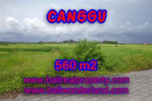 Land for sale in Canggu Bali, Wonderful view in Canggu Cemagi – TJCG138