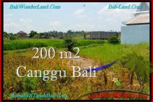 Beautiful 200 m2 LAND IN CANGGU FOR SALE TJCG191