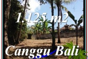 Beautiful 1,125 m2 LAND SALE IN CANGGU TJCG208