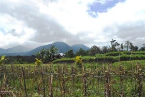 Tabanan Land for sale Mountain view  in Tabanan Baturiti Bali