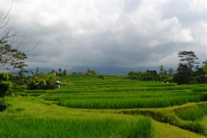 Bali Land for sale 60 Ares in Tabanan
