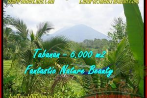 6.000 m2 LAND IN TABANAN FOR SALE TJTB182