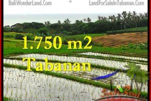 Exotic 1,775 m2 LAND FOR SALE IN TABANAN BALI TJTB264