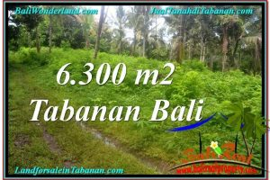 Exotic PROPERTY 6,300 m2 LAND FOR SALE IN Tabanan BALI TJTB313