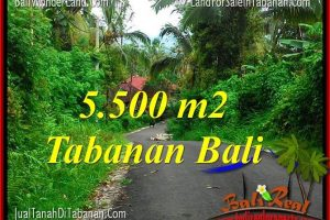 Exotic LAND IN Tabanan Penebel BALI FOR SALE TJTB323