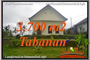 Magnificent TABANAN BALI 3,700 m2 LAND FOR SALE TJTB336