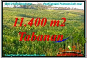 Beautiful 11,400 m2 LAND FOR SALE IN Tabanan Selemadeg BALI TJTB339