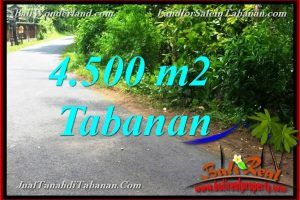 Magnificent PROPERTY 4,500 m2 LAND IN Tabanan Selemadeg BALI FOR SALE TJTB380