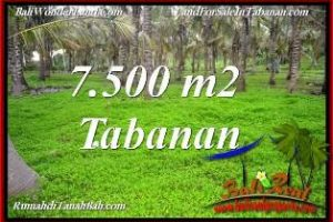 Beautiful PROPERTY 7,500 m2 LAND SALE IN TABANAN SELEMADEG BALI TJTB390