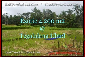 FOR SALE Affordable LAND IN Ubud Tegalalang TJUB461