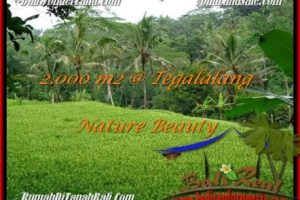 Affordable PROPERTY UBUD BALI 2,000 m2 LAND FOR SALE TJUB490
