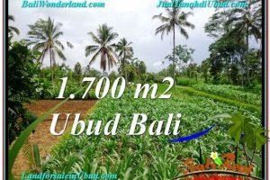Affordable LAND SALE IN Ubud Payangan BALI TJUB560