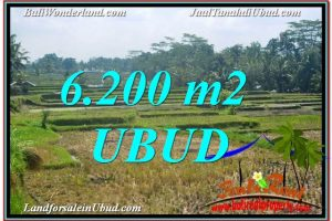 Affordable PROPERTY 6,200 m2 LAND FOR SALE IN Ubud Payangan TJUB631