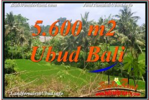 Affordable 5,600 m2 LAND IN Sentral / Ubud Center BALI FOR SALE TJUB636