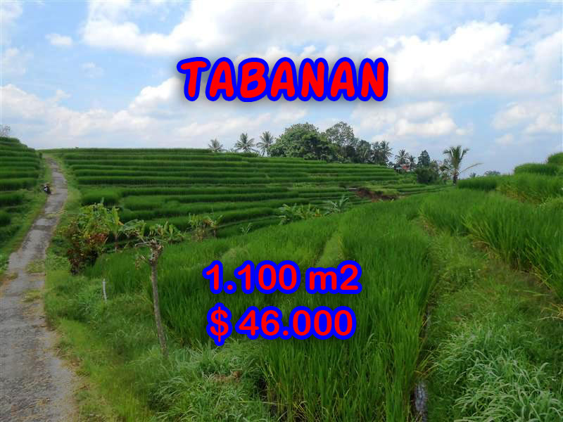 Property for sale in Tabanan land