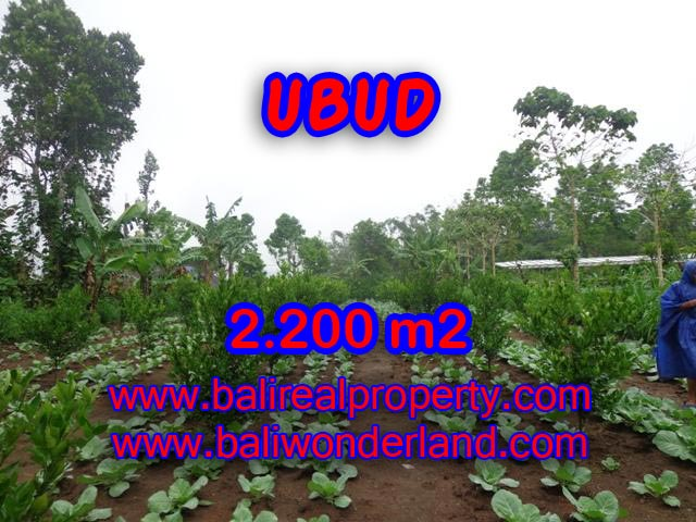 Land for sale in Bali, astonishing view in Ubud Tegalalang Bali – TJUB348