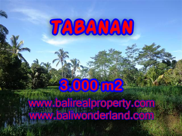 Magnificent Land for sale in Bali, Rice fields and mountain view in Tabanan Penebel Bali – TJTB110