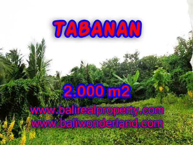 Land in Tabanan for sale, Stunning view in Tabanan Selemadeg Bali – TJTB099