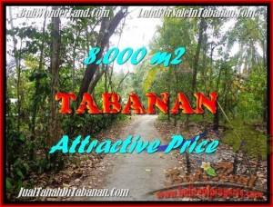 Beautiful PROPERTY 8,000 m2 LAND IN Tabanan Selemadeg FOR SALE TJTB161