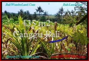 Exotic PROPERTY LAND IN Canggu Pererenan BALI FOR SALE TJCG196