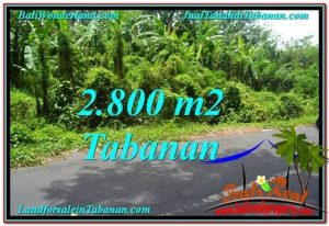 2,800 m2 LAND SALE IN TABANAN TJTB300