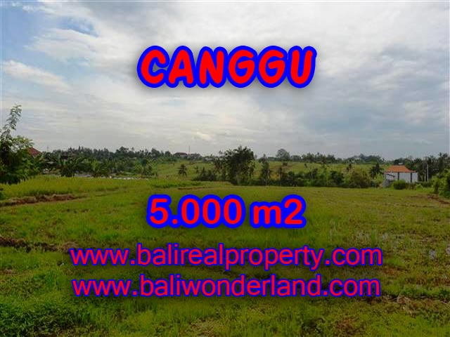 Land for sale in Canggu, Magnificent view in Canggu Babakan Bali – TJCG132