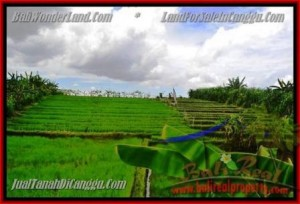 FOR SALE Exotic PROPERTY 290 m2 LAND IN CANGGU TJCG141