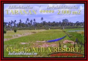 FOR SALE 2.000 m2 LAND IN TABANAN TJTB187