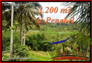 Exotic PROPERTY 3,200 m2 LAND SALE IN TABANAN BALI TJTB216