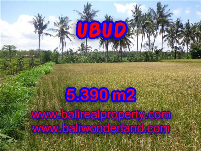 Fantastic Land for sale in Ubud Bali, rice fields and Ayung river view in Ubud Mas– TJUB342