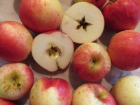Ein früher, aromatischer Apfel, derzeit noch unbekannt