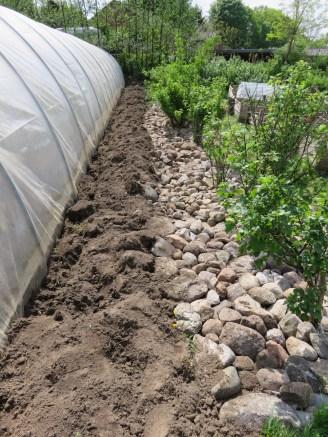 Steinmulch unter Beerensträuchern