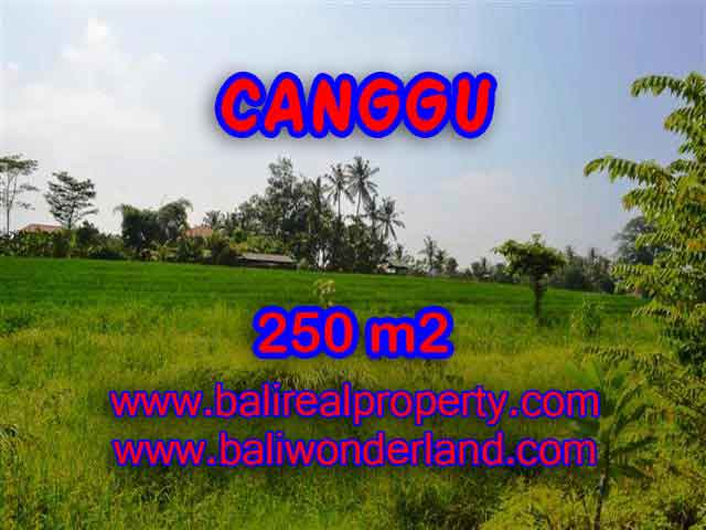 Fantastic Land for sale in Bali, rice fields view in Pererenan– TJCG135
