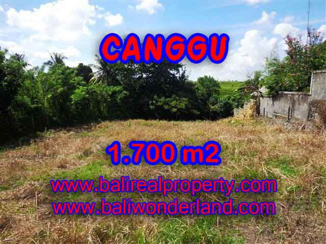 Land in Bali for sale, great view in Canggu Bali – TJCG143