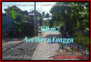 Beautiful PROPERTY 250 m2 LAND FOR SALE IN CANGGU BALI TJCG182