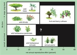 wildplants3