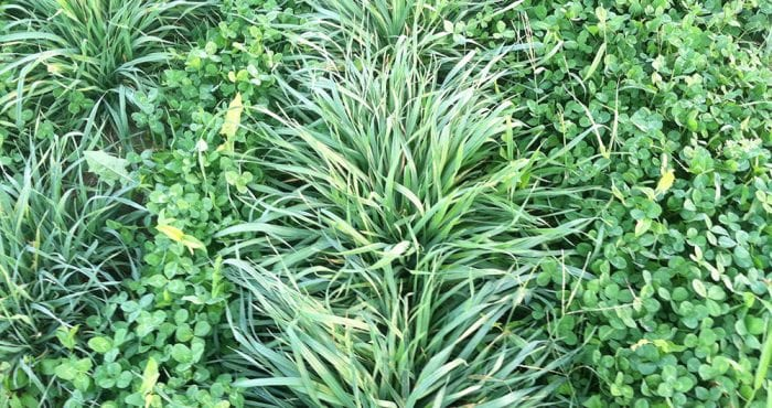 Ecological Intensification Intercropping